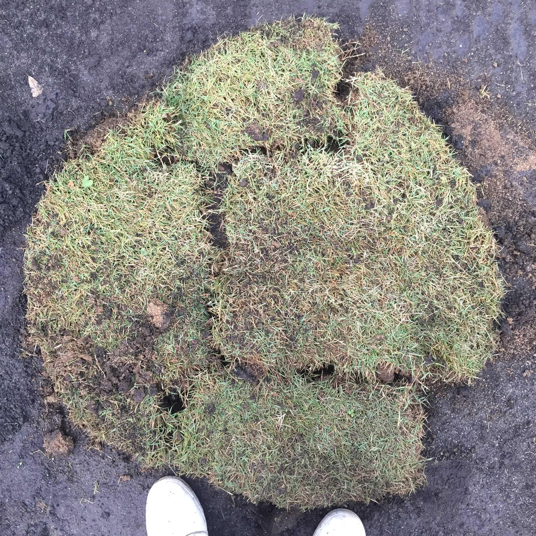 はがし終えた芝(切りとった芝)