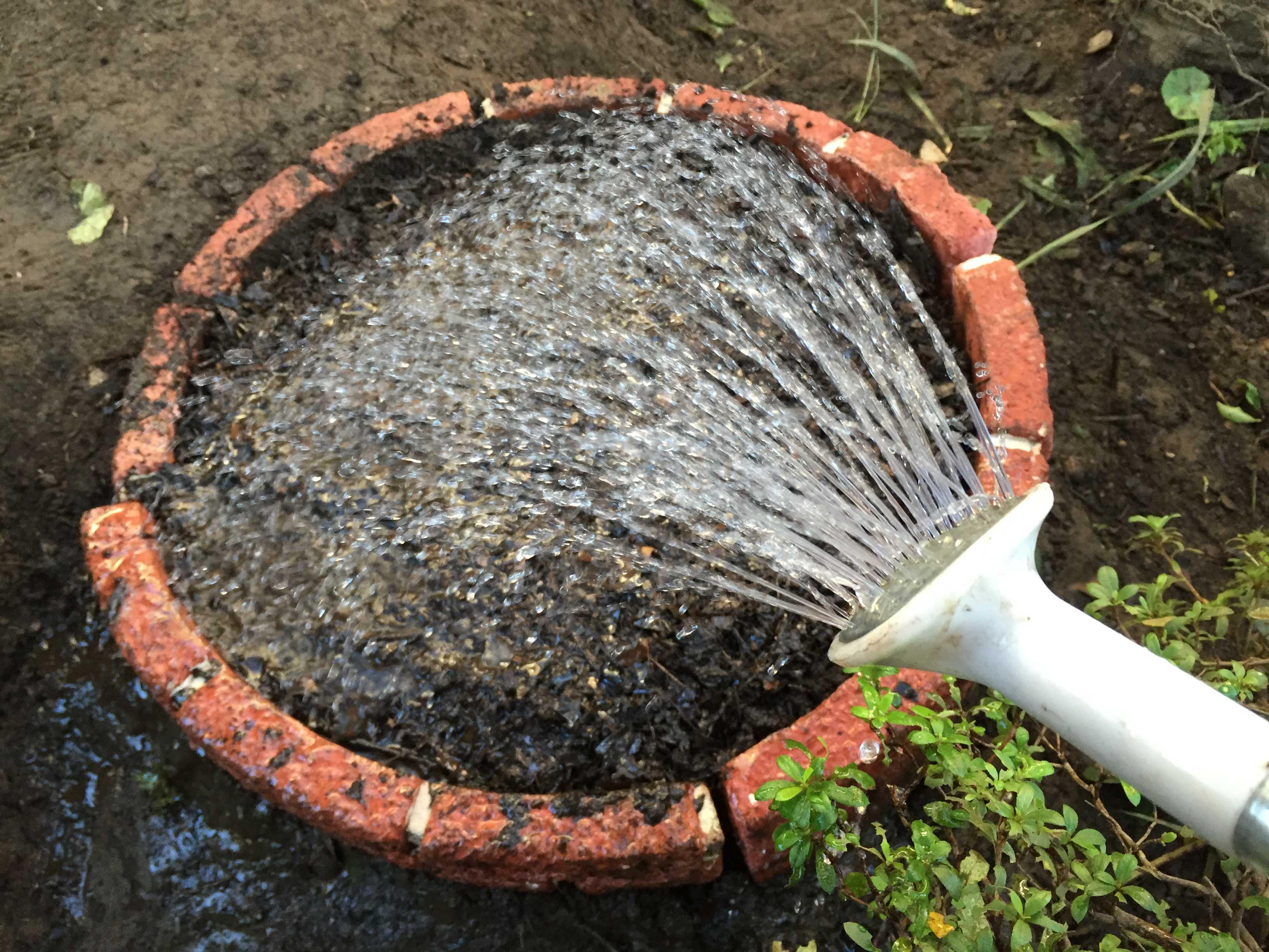 ヤマユリの球根植え付け - 灌水