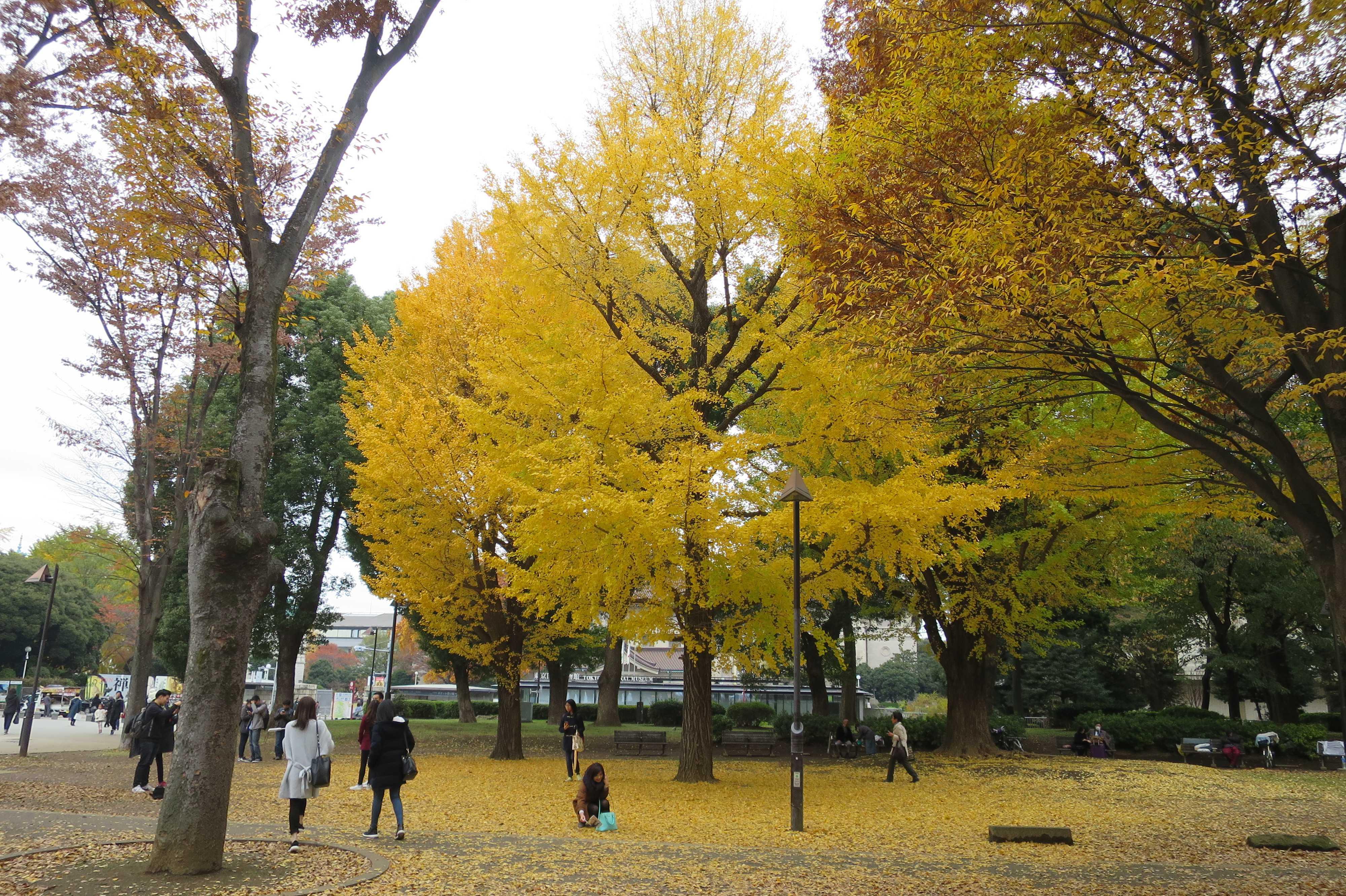 上野の森のいちょう