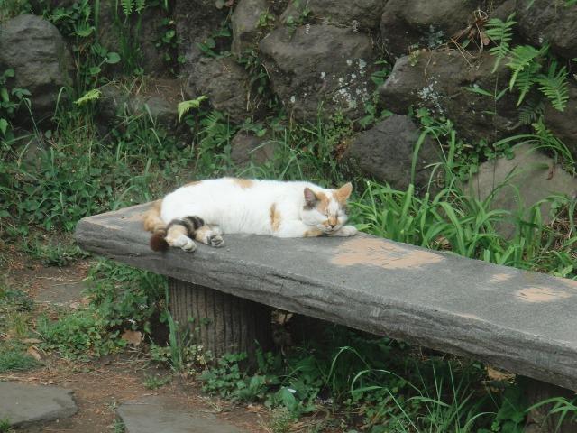 真鶴岬 - お昼寝中の猫(ネコ)