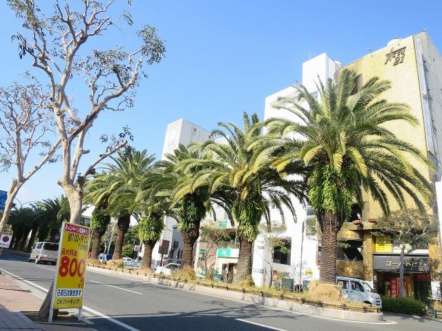 高知市内の椰子の木
