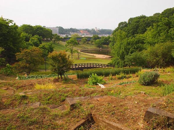 八王子・栃谷戸公園 小学生の子たちが木登り