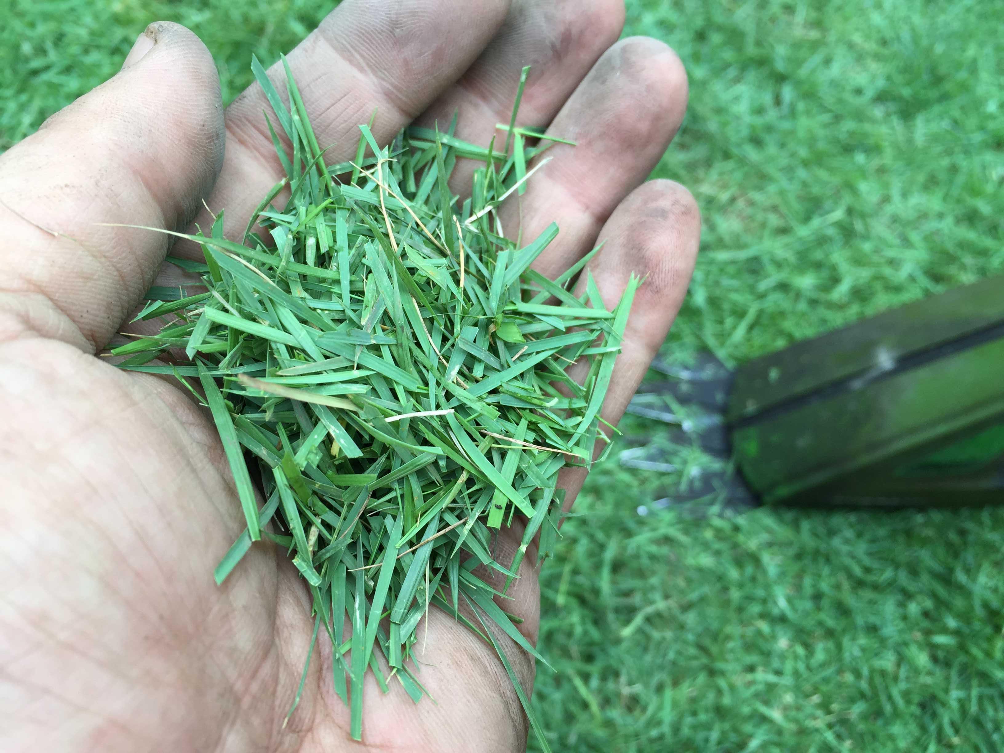 刈った芝(刈りカス)