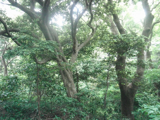 真鶴の原生林