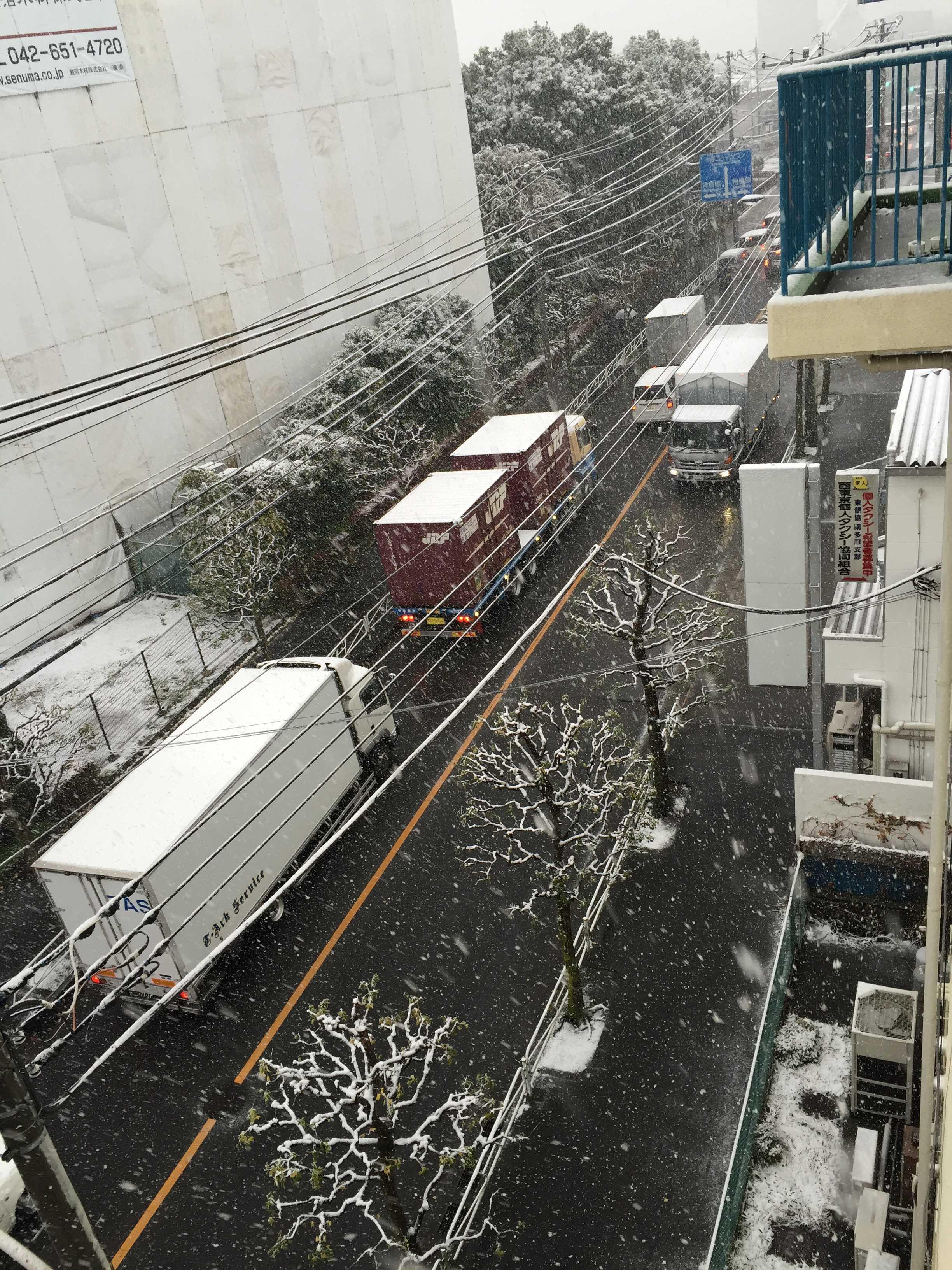 11月の積雪(東京都八王子市)