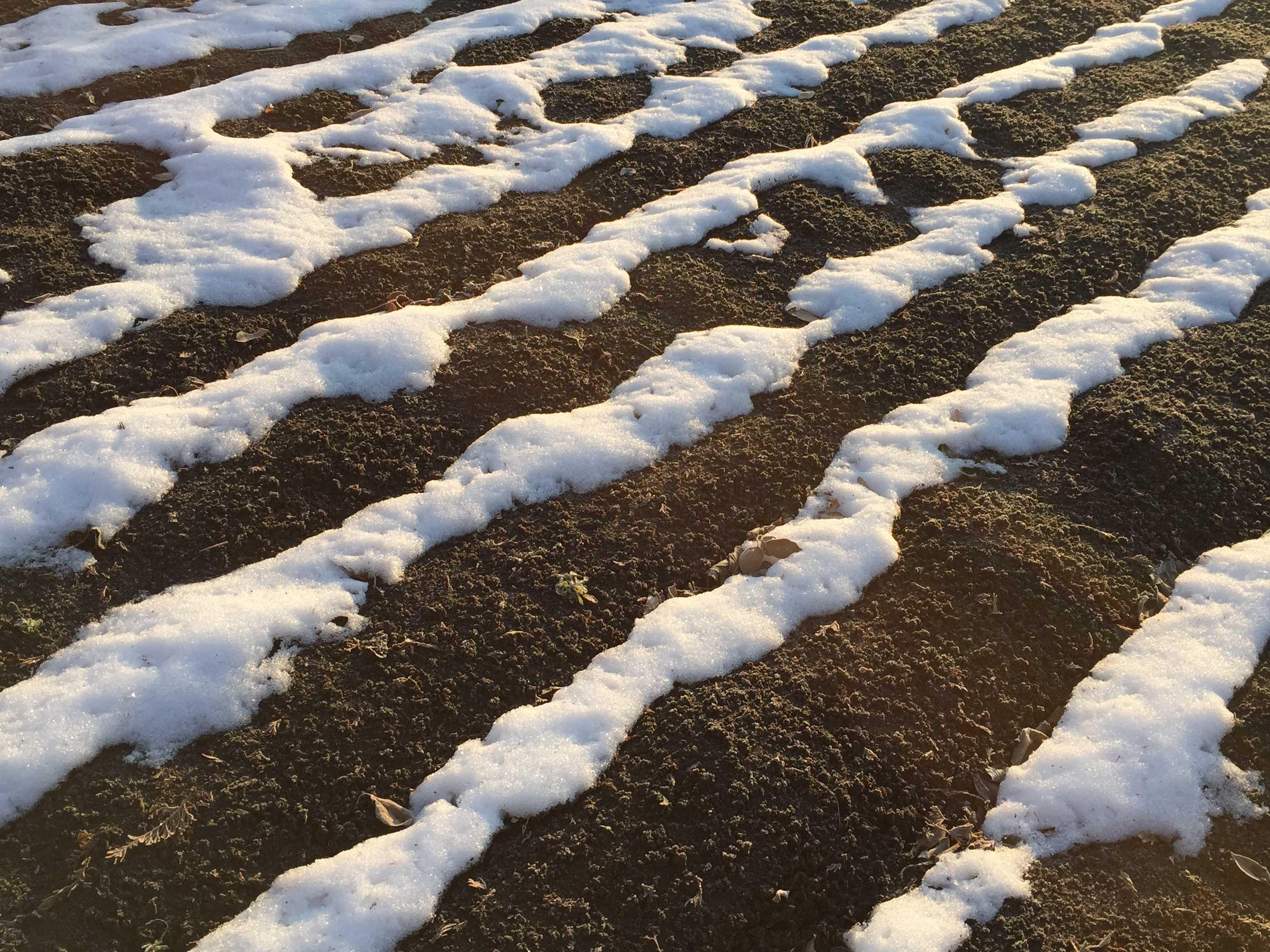 まだ雪残る畑