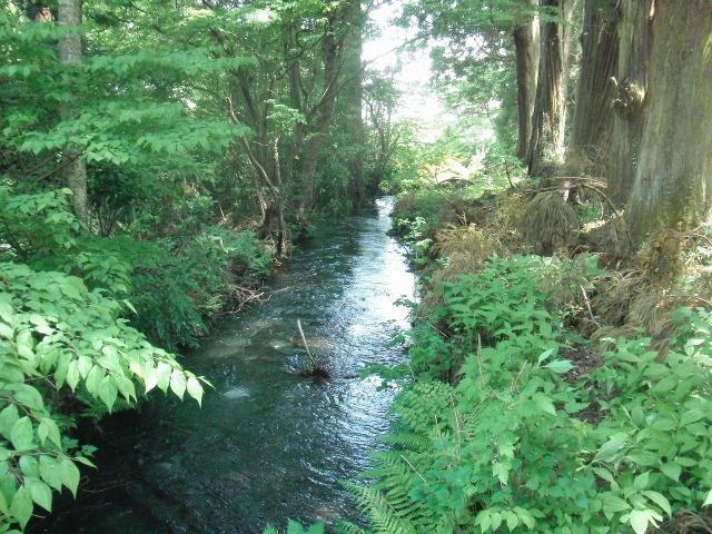 杉並木公園の川