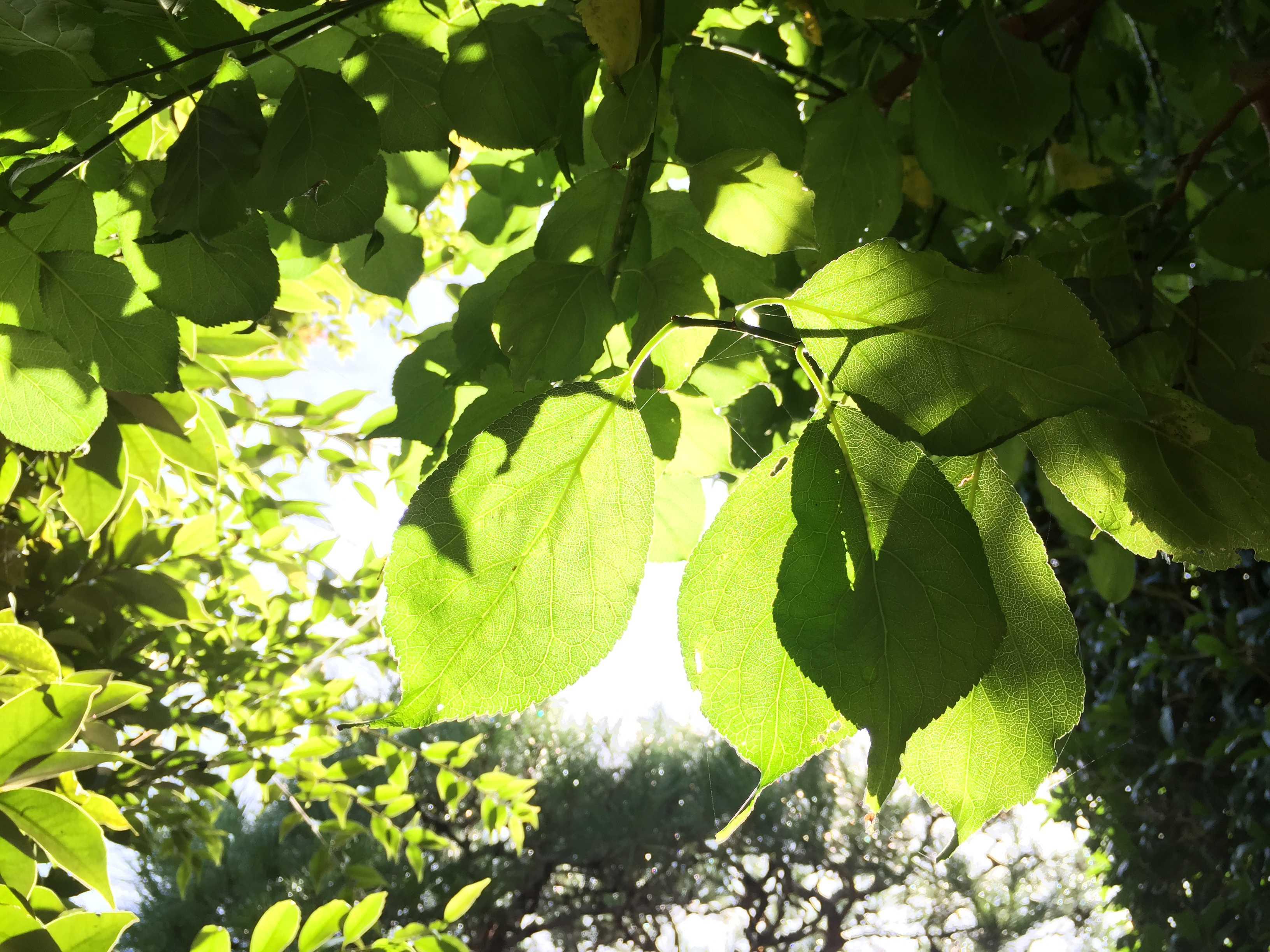夏の終わり。光り輝く鮮やかなグリーン
