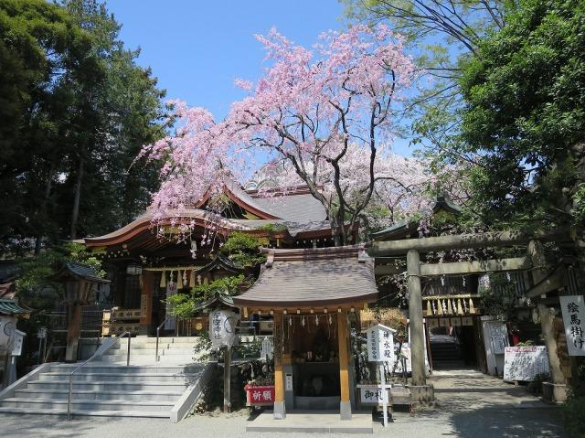春の青い空としだれ桜(八王子市)