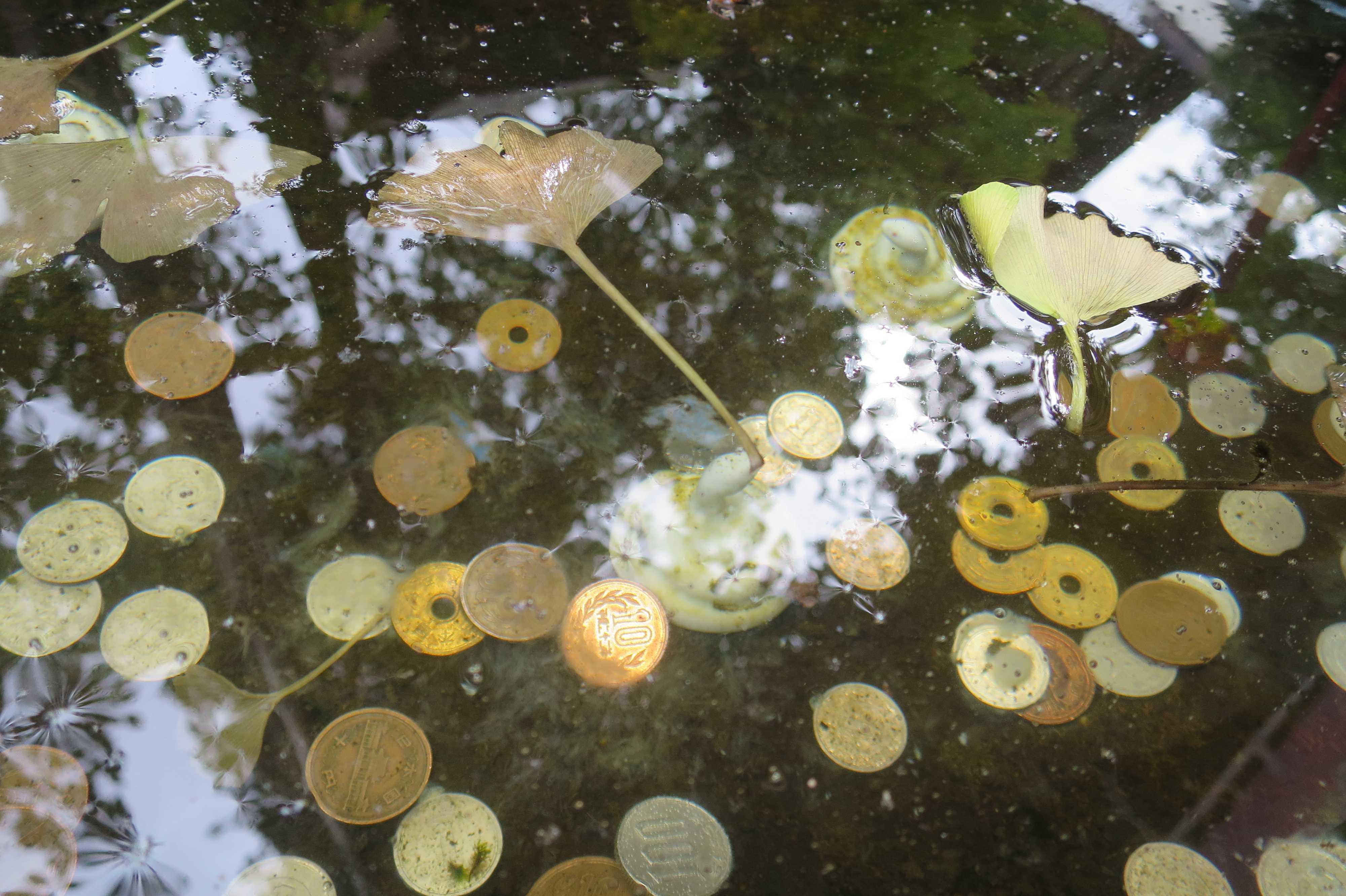 水鉢の水の上に浮くイチョウの葉と水鉢の水の中の10円玉