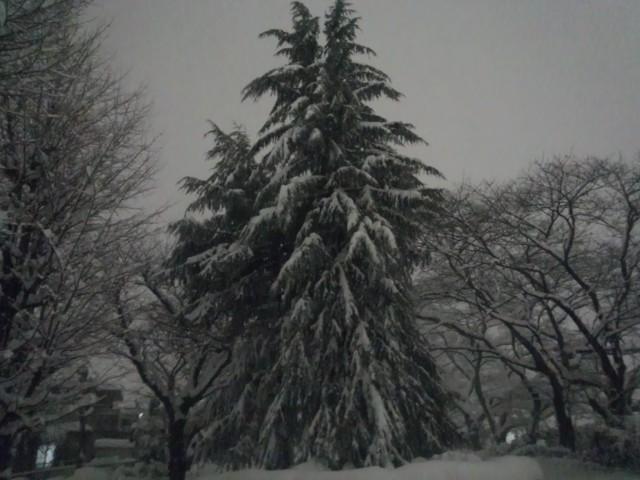 大雪と大木