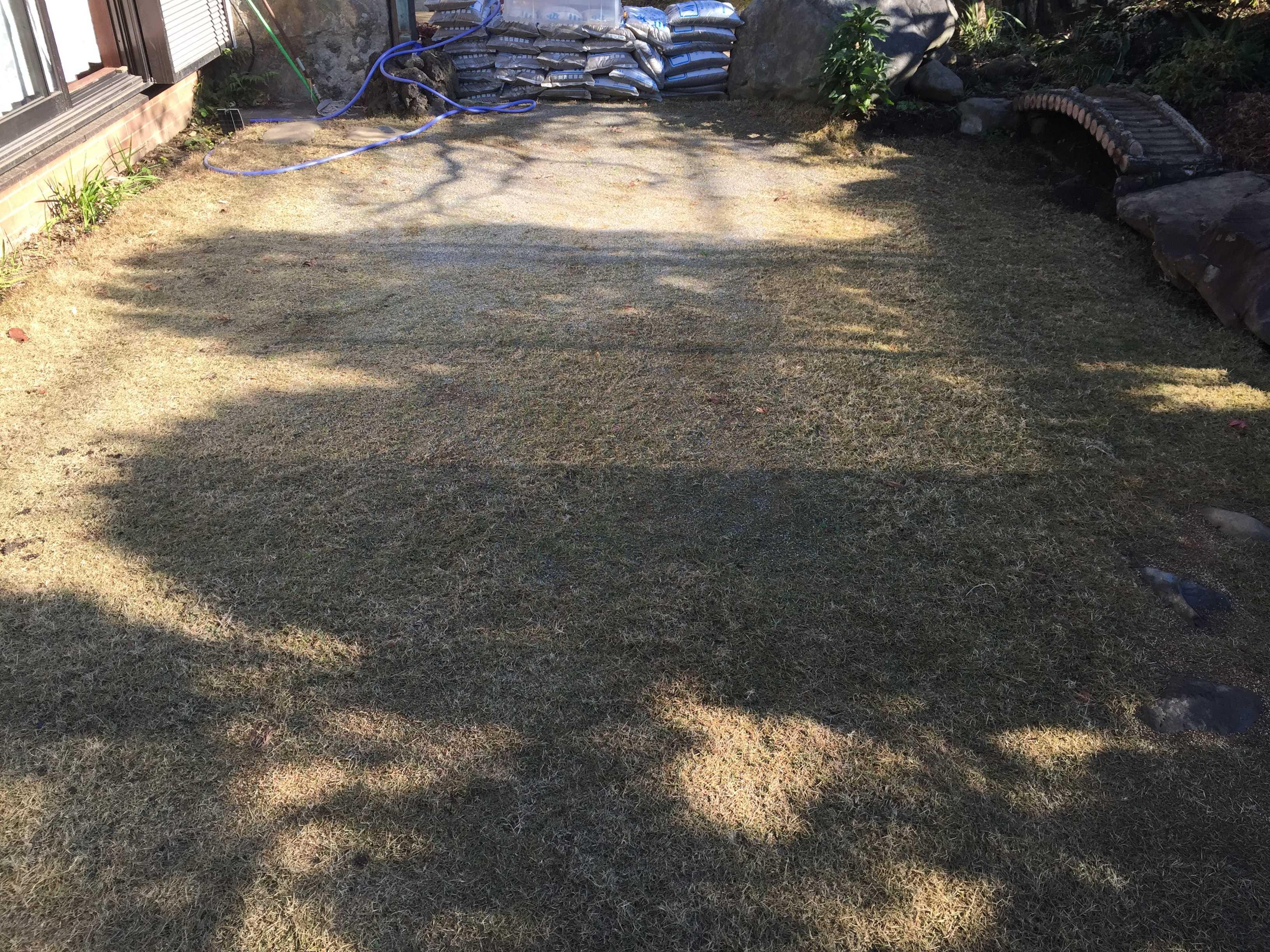 休眠中(冬眠中)の芝生TM9