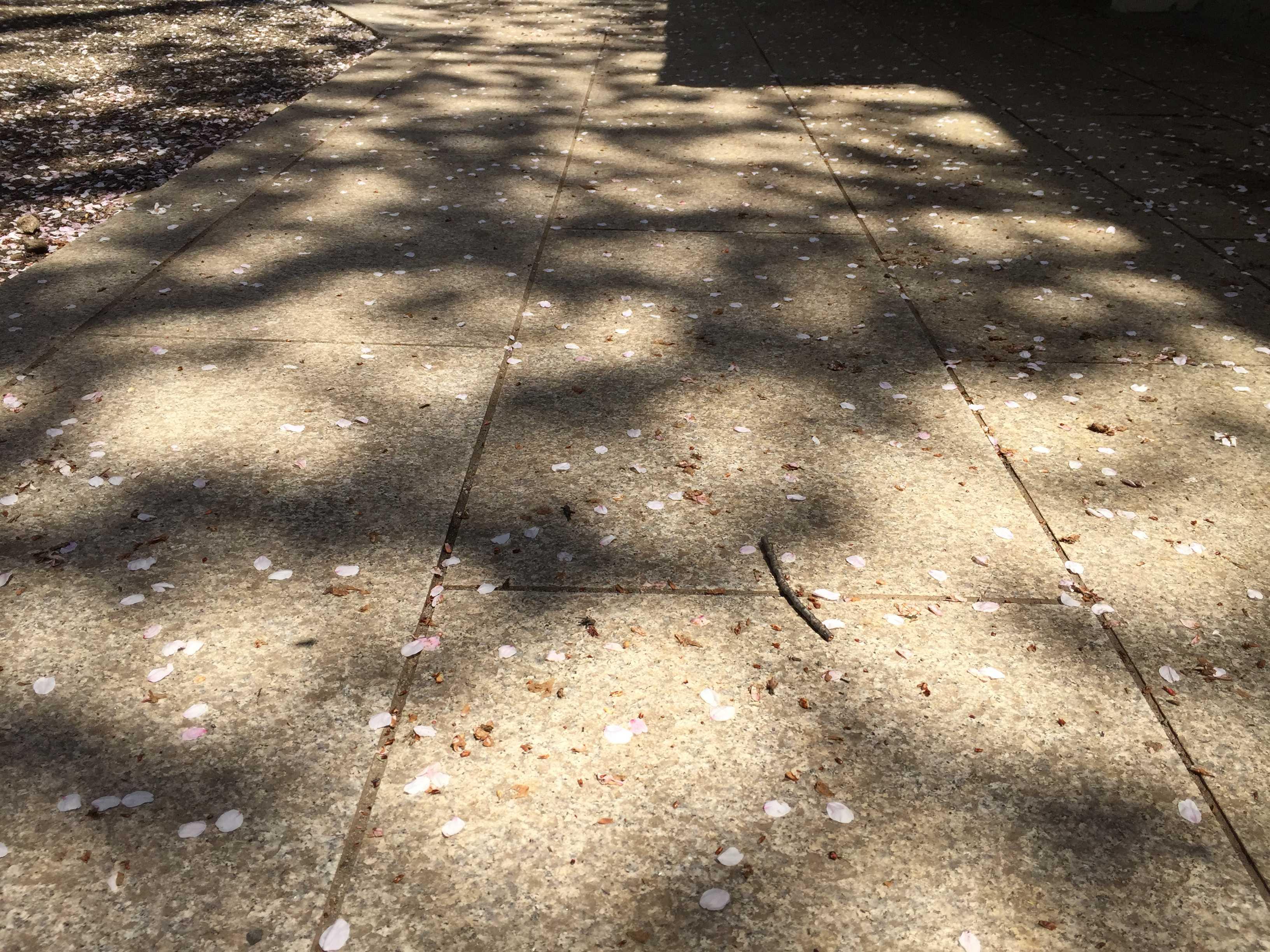 子安神社(東京・八王子)の石畳と桜の花びら