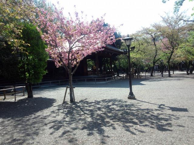 東京・九段 靖国神社