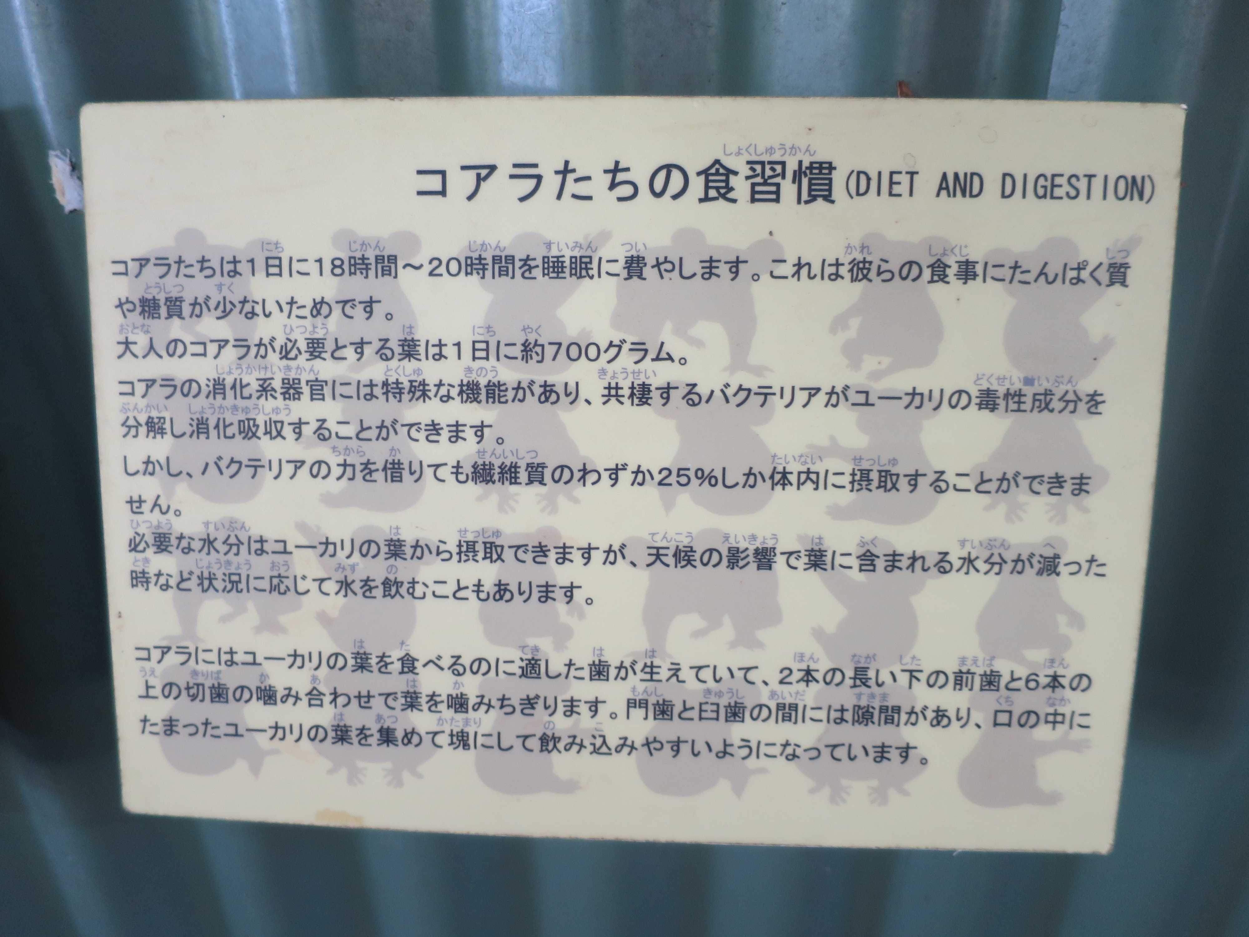 ケアンズ動物園 - コアラたちの食習慣(DIET AND DIGESTION)