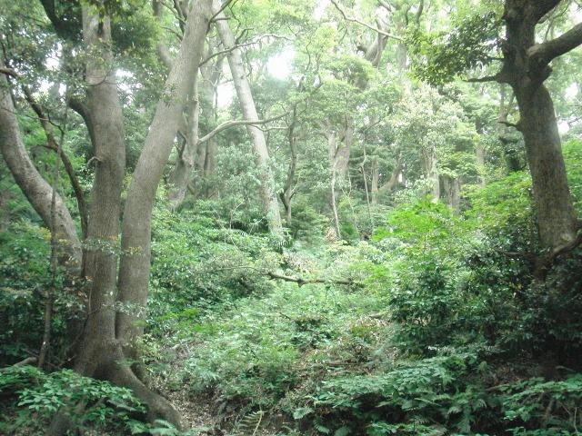 真鶴半島の原生林