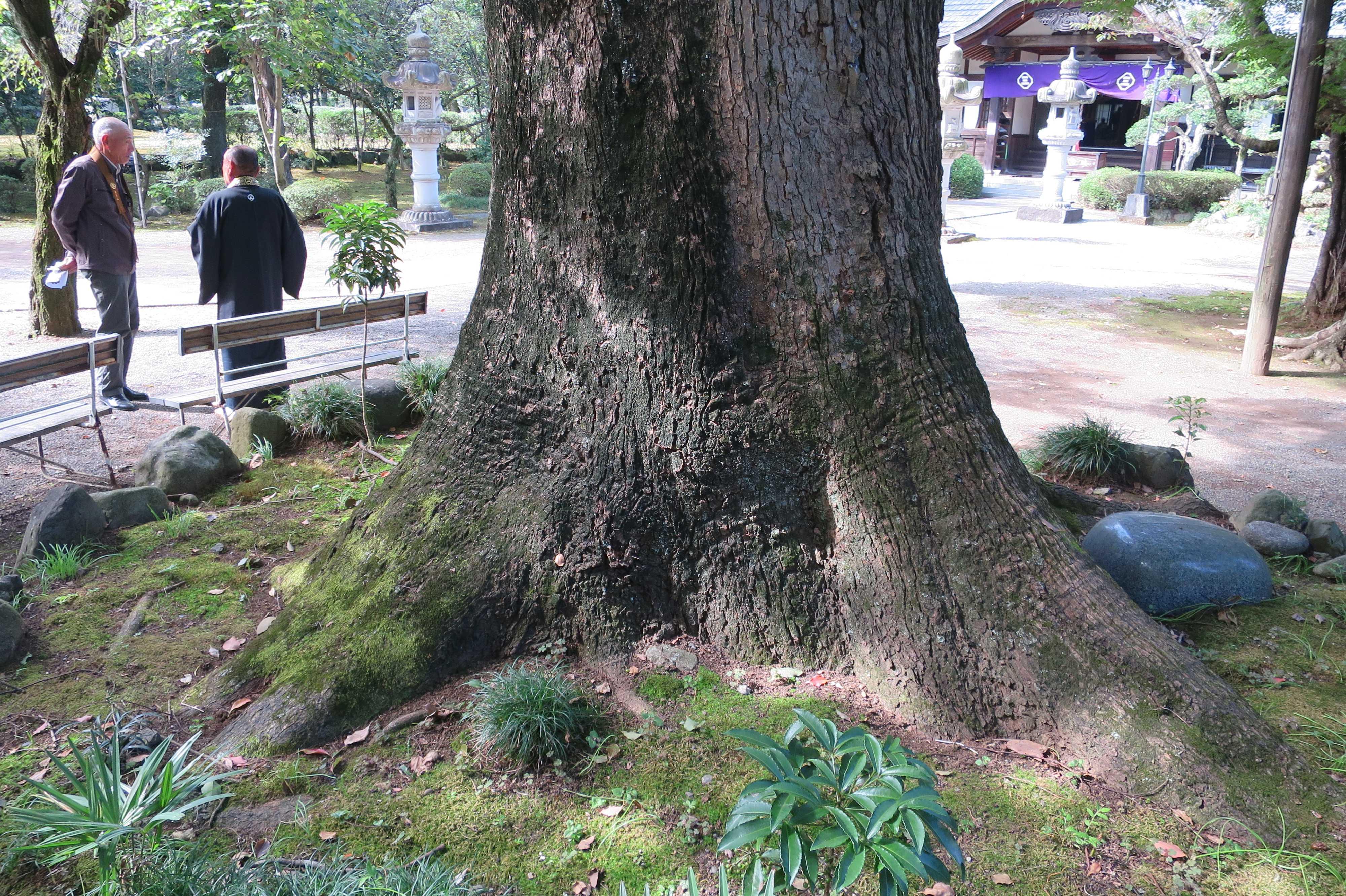 無量光寺の大樹の根元