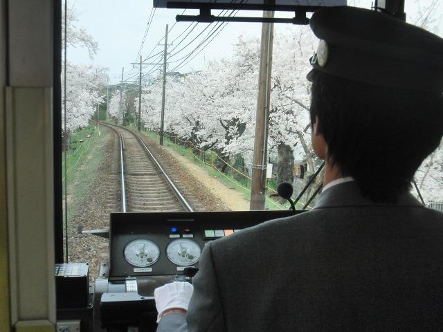 嵐電 - 桜のトンネル
