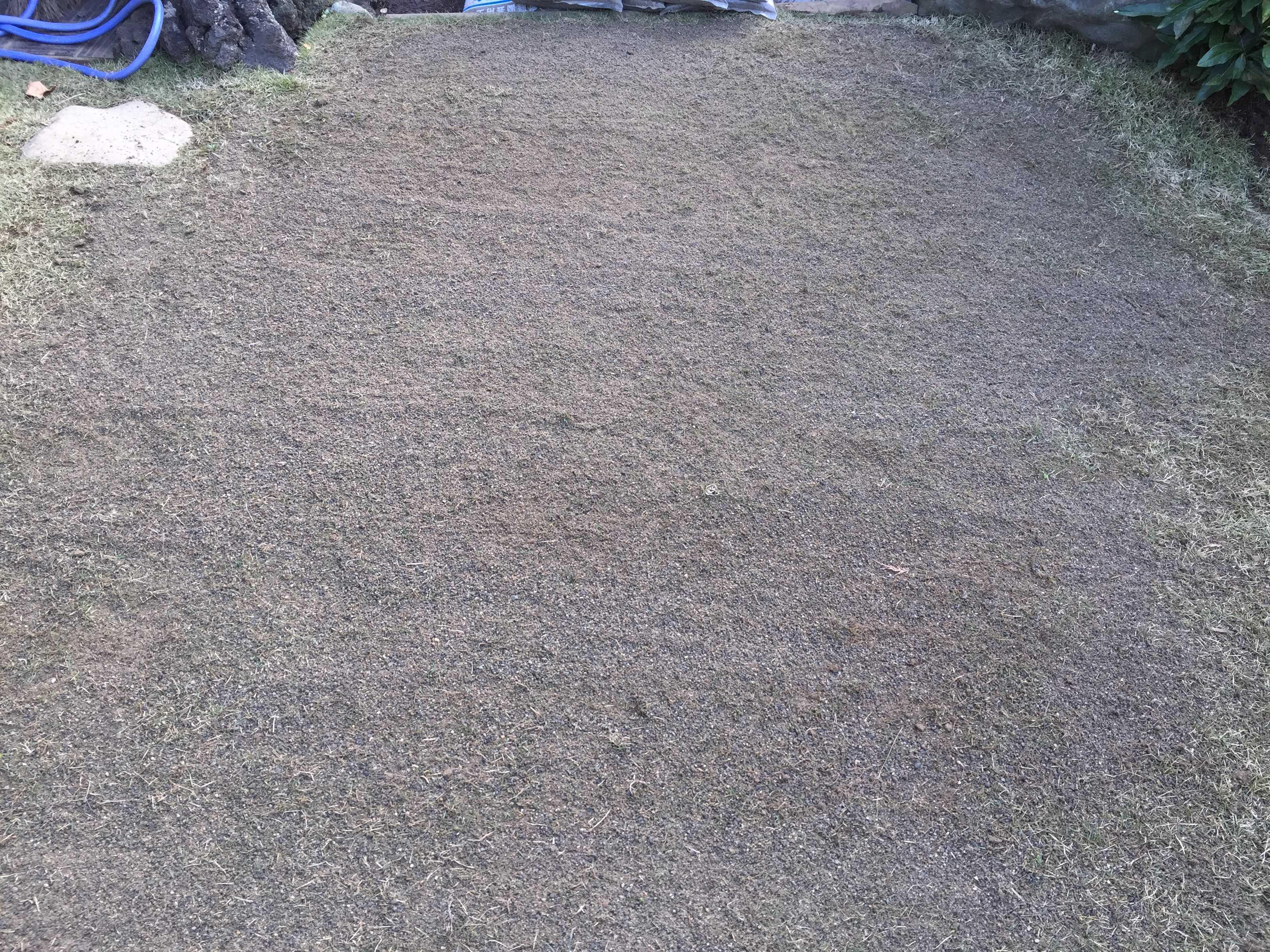植え付け 5ヶ月。目砂を入れた芝生・TM9(ティーエムナイン)