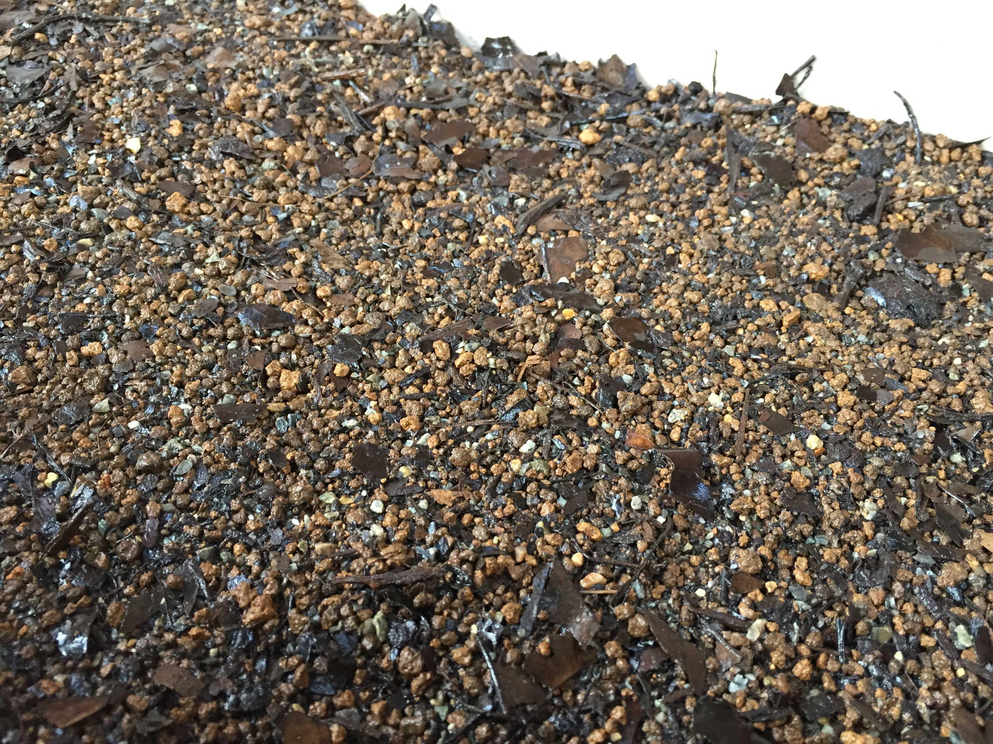 ヤマユリの種子繁殖/実生 - 水撒き