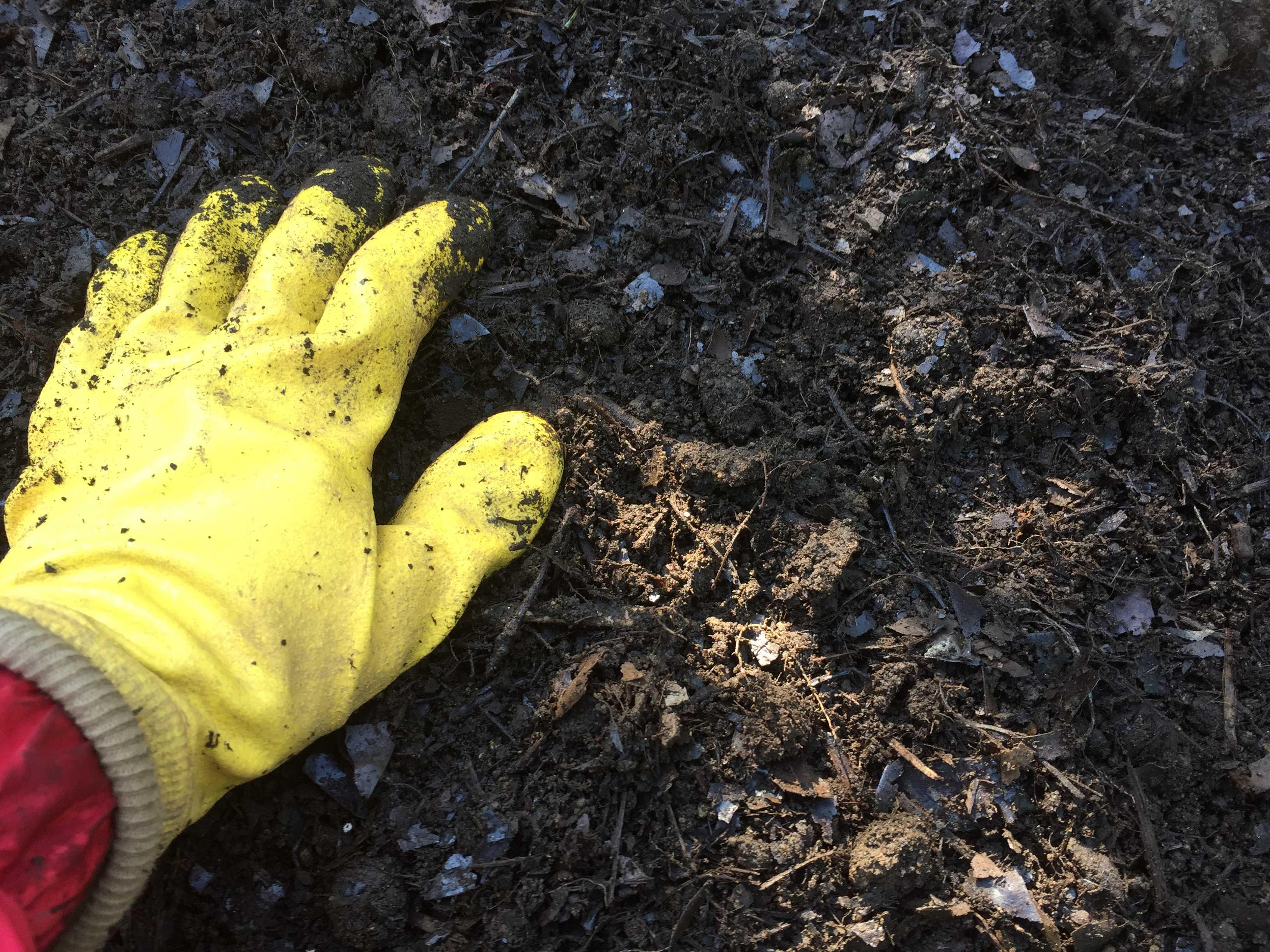 腐葉土とマグァンプKを混ぜる - 水仙の球根の植え方