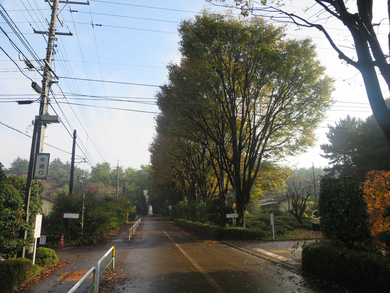 全生園 中央通りと栄通りの交差点