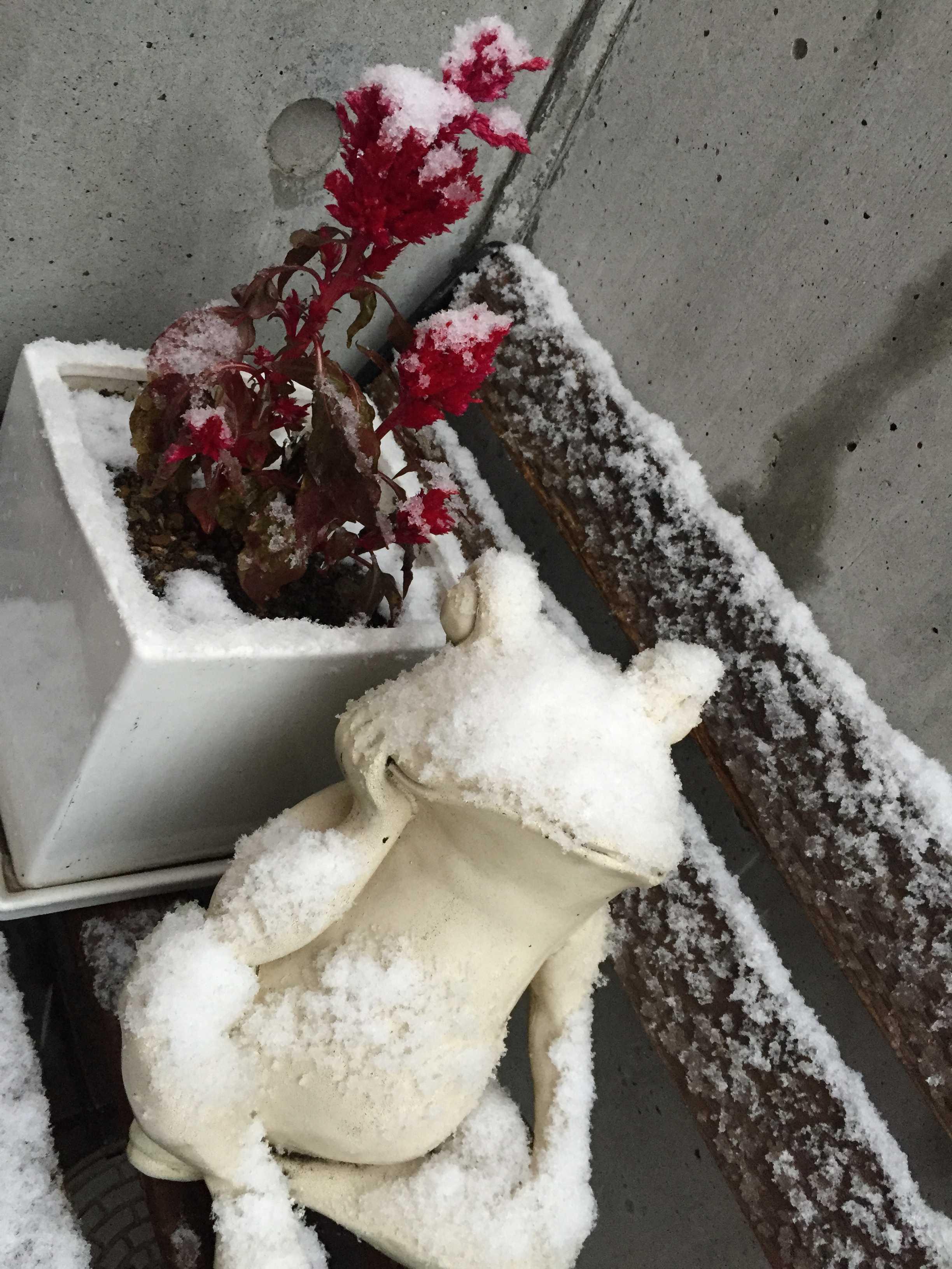 11月の初雪(東京都八王子市)