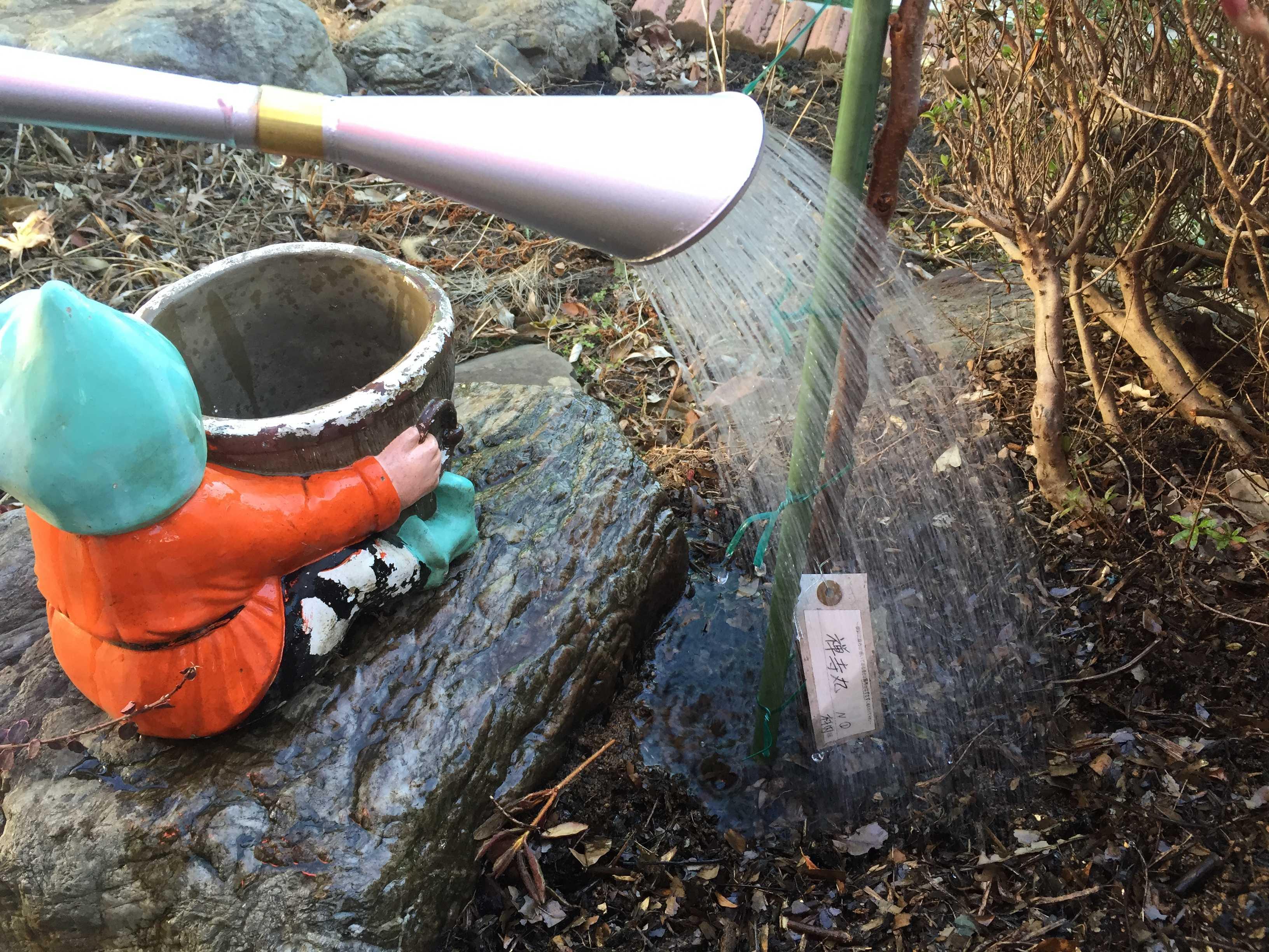 萬年 高級園芸ジョーロ 10L(尾上製作所)の丸形のハス口から出るキレイな水