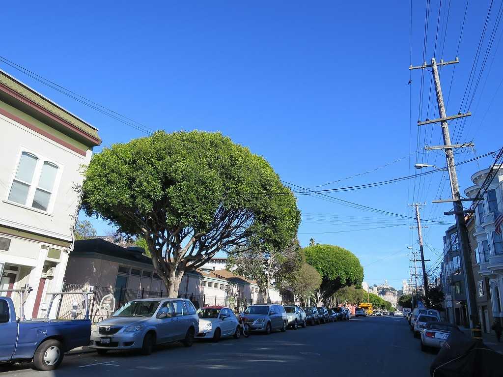 カリフォルニアの空と木々の緑のコントラスト