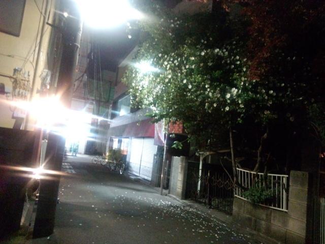 夜の白いナニワイバラ