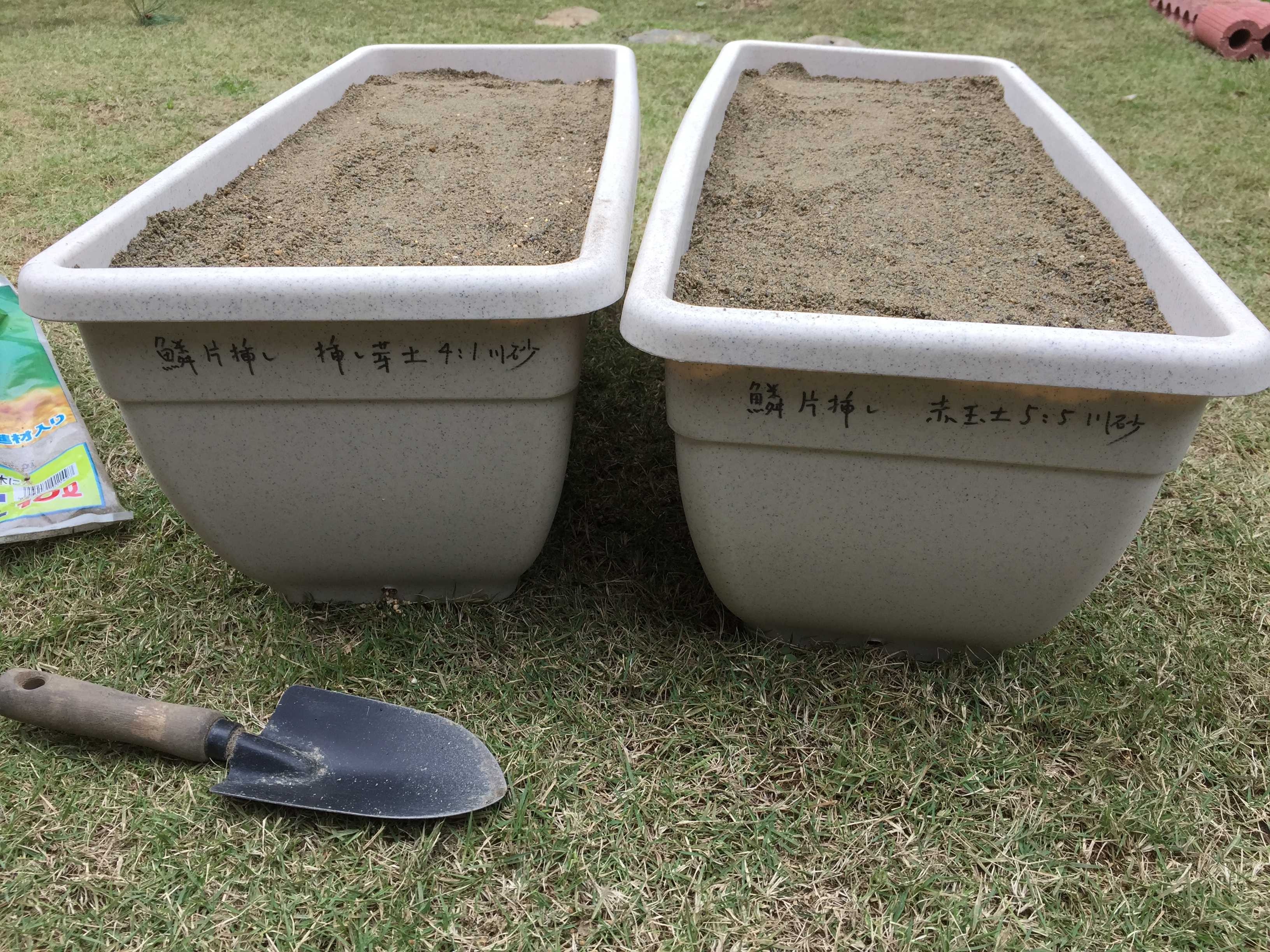 ヤマユリの鱗片挿しのプランター - 用土の配合比率