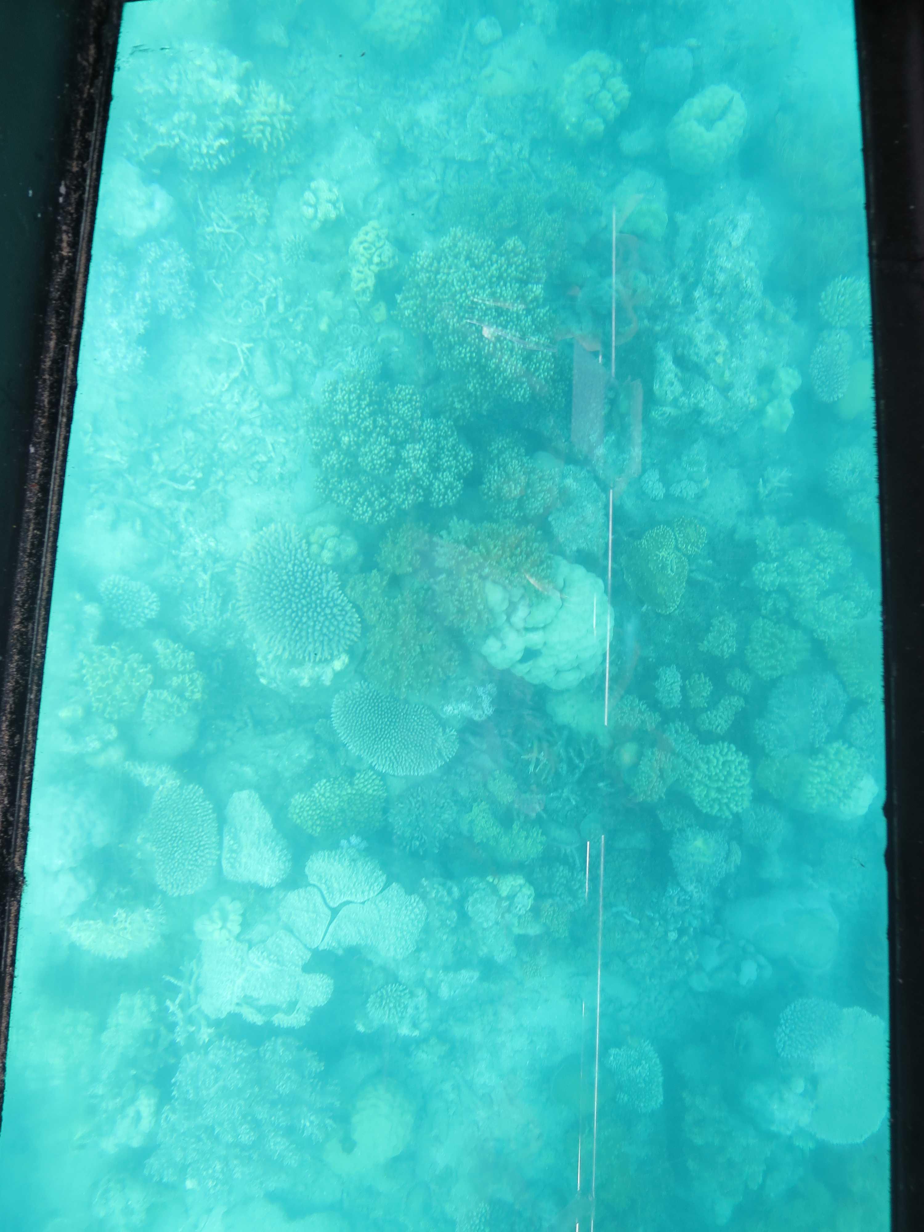 グリーン島 サンゴ