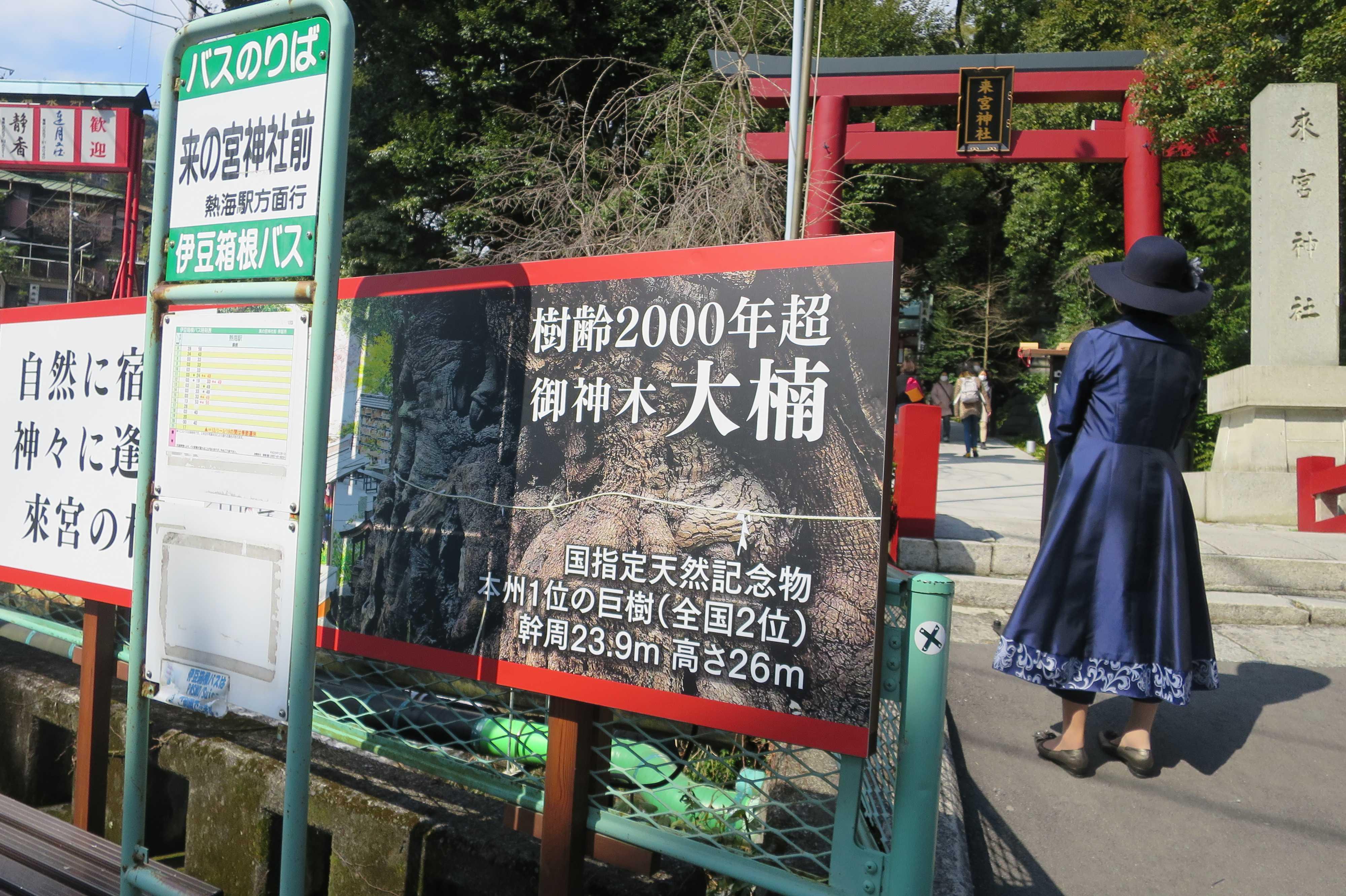 樹齢2000年超 御神木 大楠 - 来宮神社の大樟