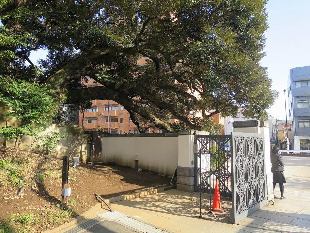 東京都庭園美術館(旧朝香宮邸)正門脇の大木