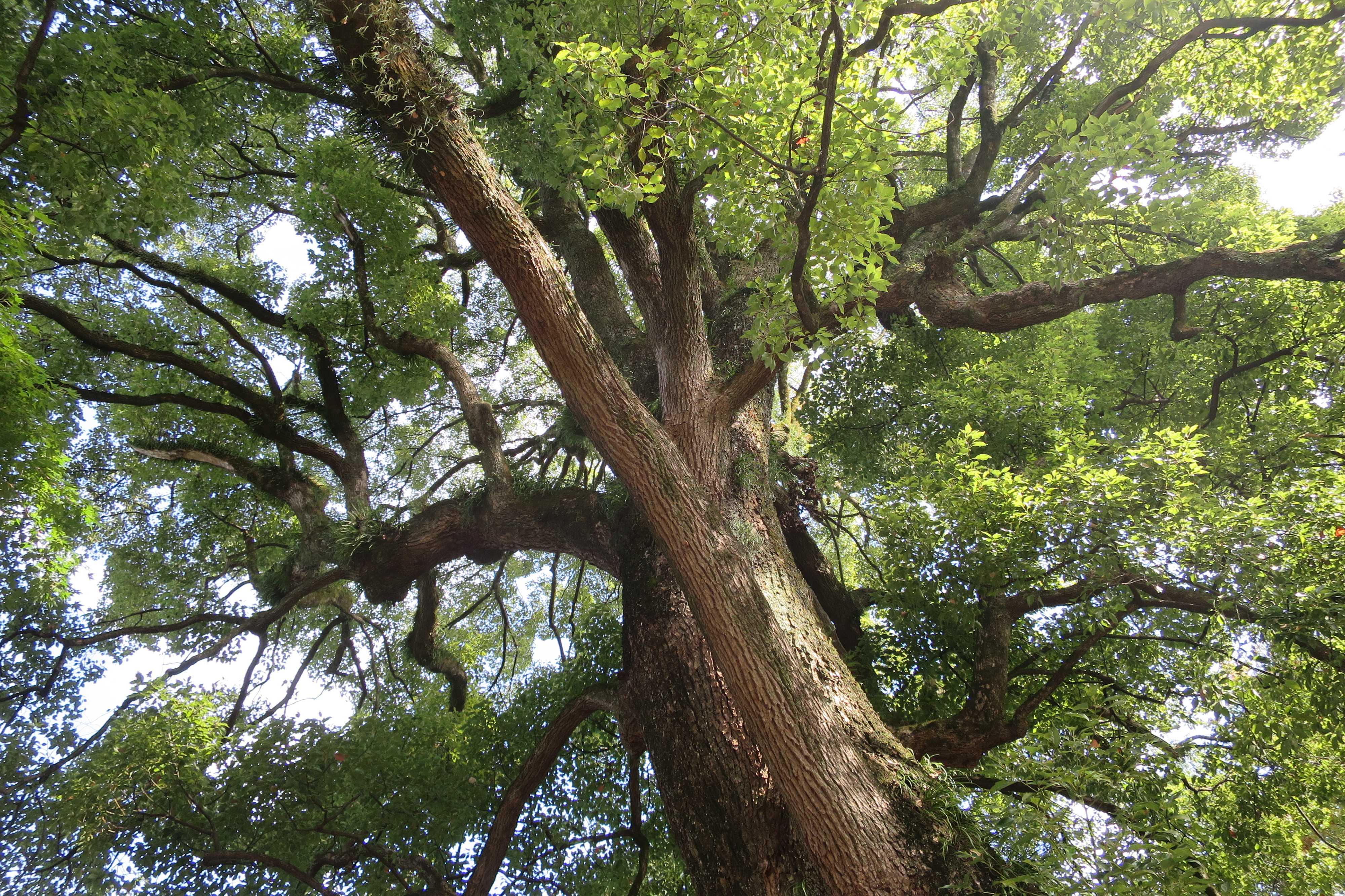 無量光寺 - 大樹のみなぎる生命力