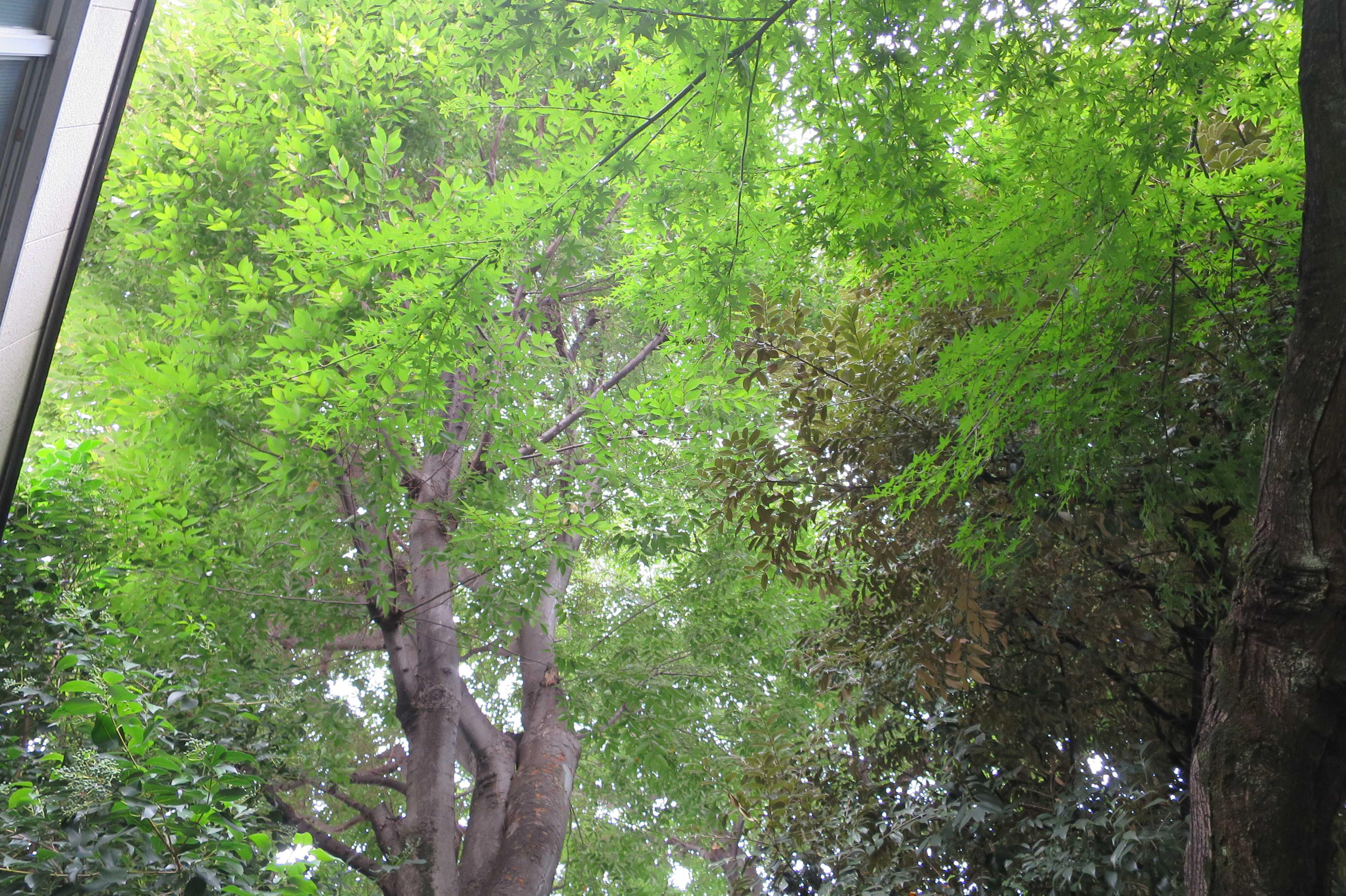弁天様(上神明天祖神社)の森