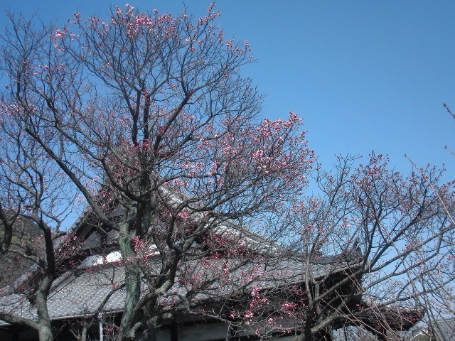 鞆の浦・法宣寺