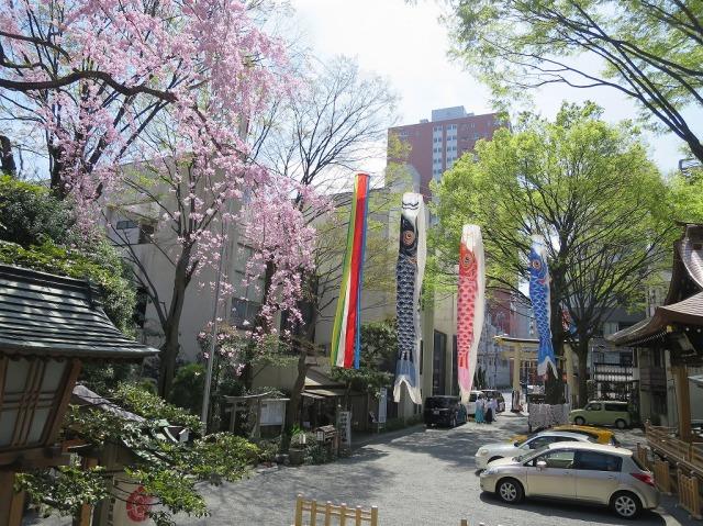 子安神社の満開のしだれ桜