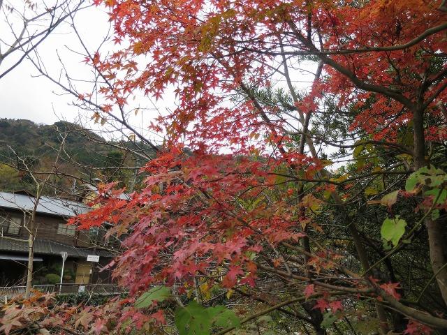 紅葉する箱根湯本