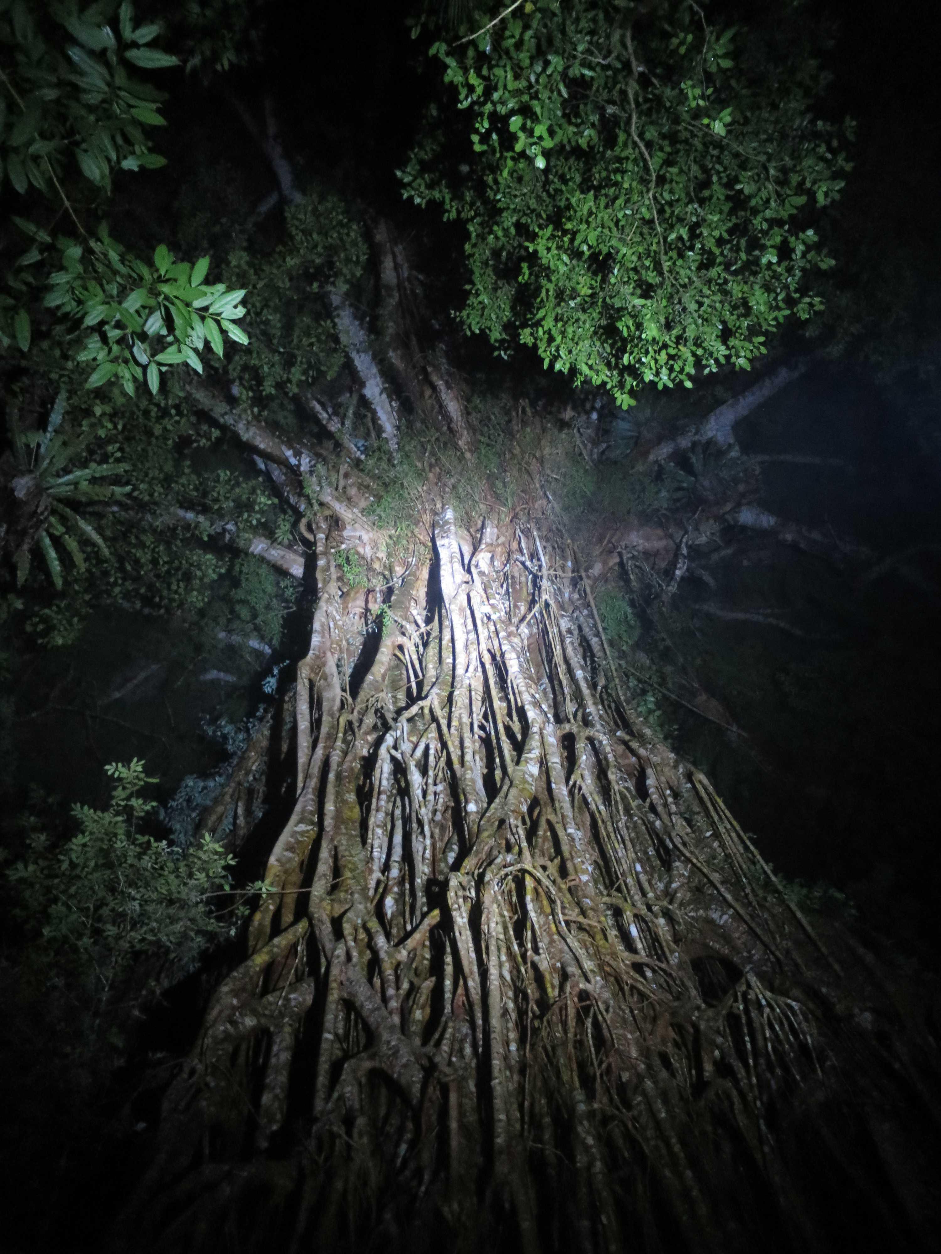いのちの木 - 聖堂の樹