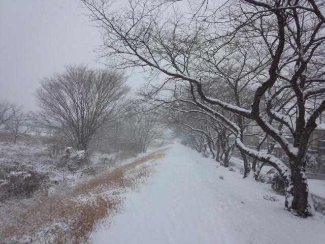真っ白な雪の道