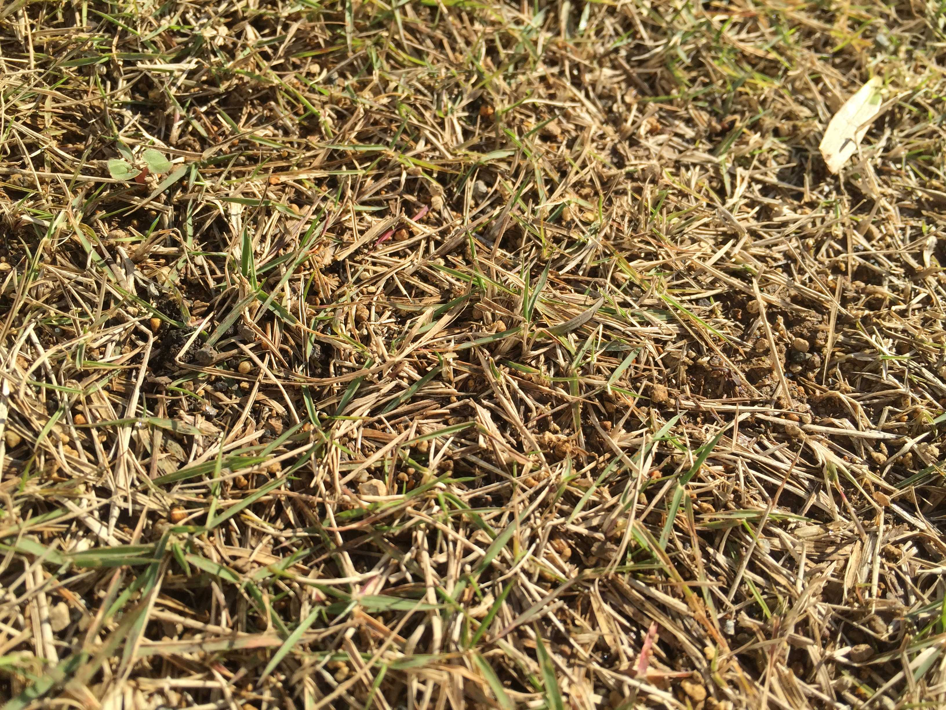 冬眠中(休眠中)の芝生TM9