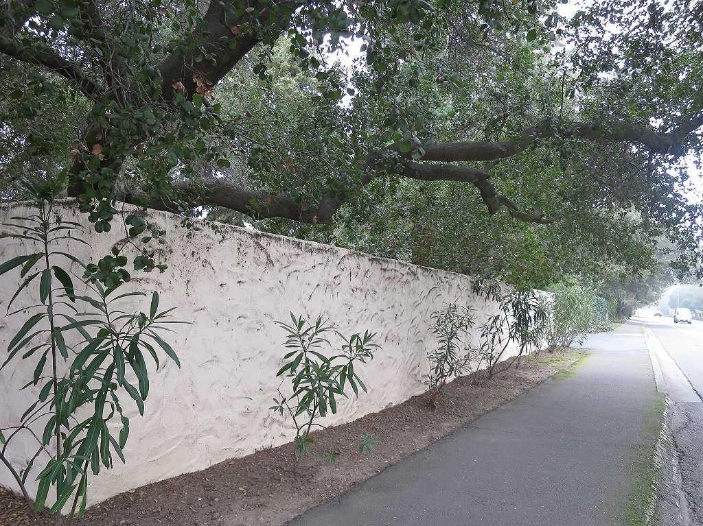 サラトガの白塀