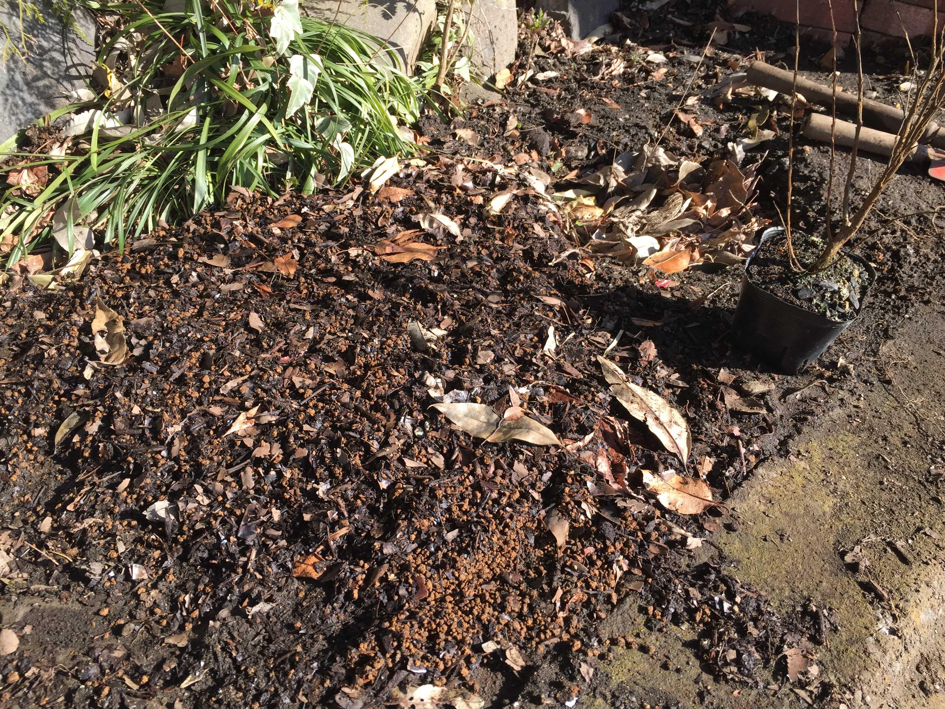 矮性サルスベリの植え付け用土