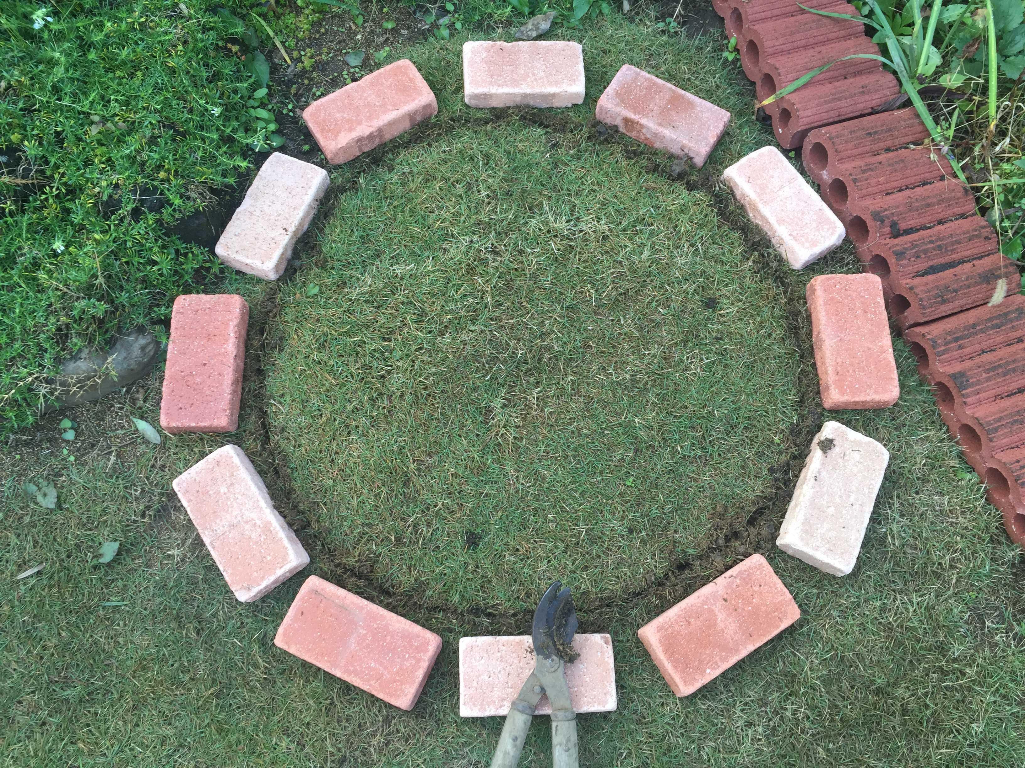 芝生(TM9)切り取り - 水仙の球根の植え方