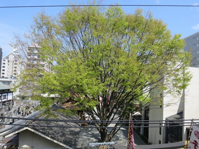 隣のビルから見た子安神社