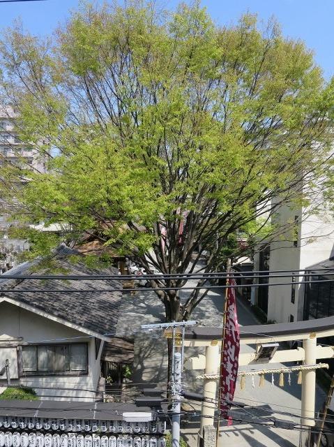 八王子市最古の神社・子安神社