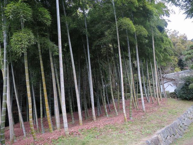 苔寺(西芳寺)の竹林