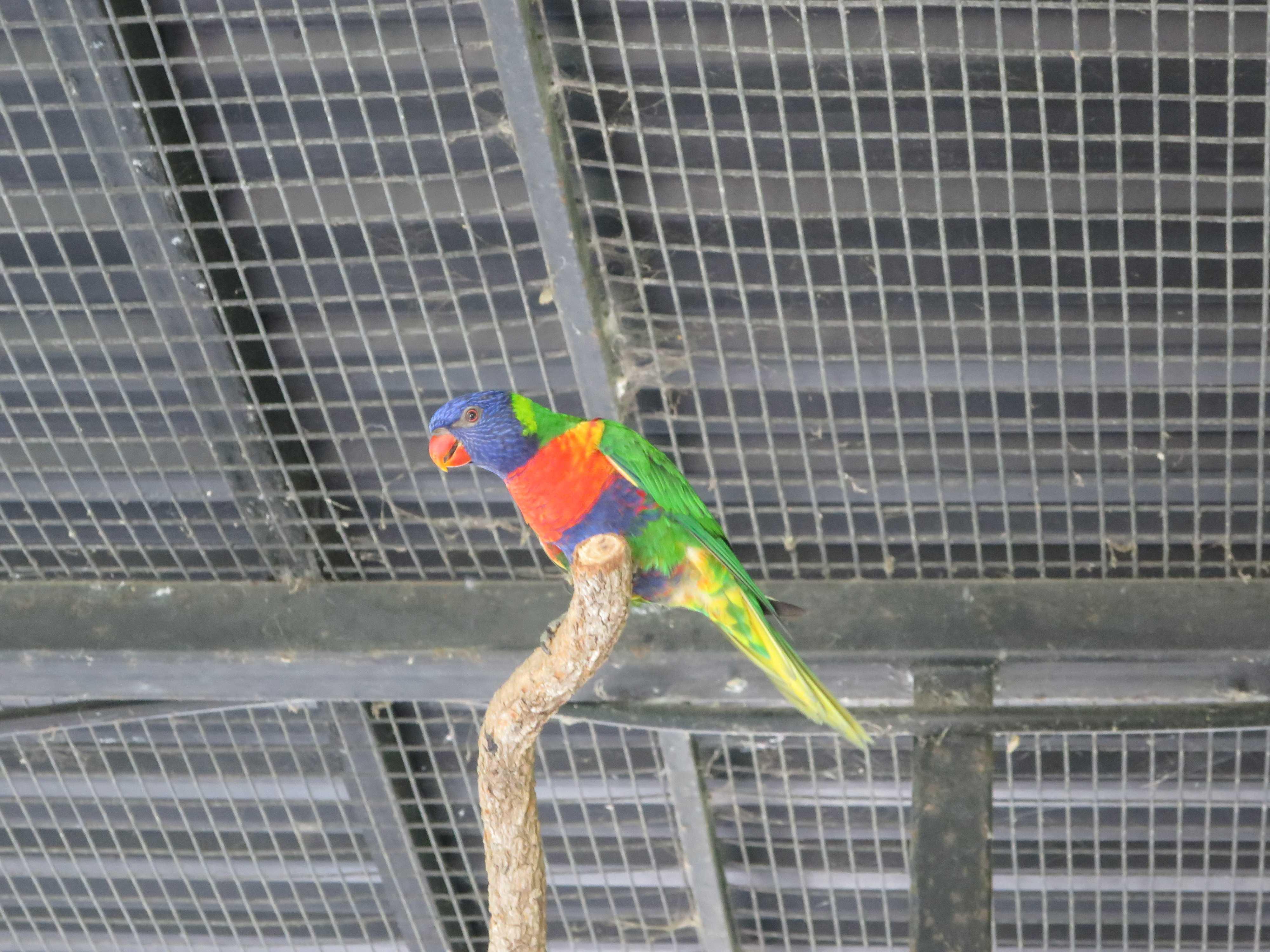 ケアンズトロピカルズー - 極彩色な鳥