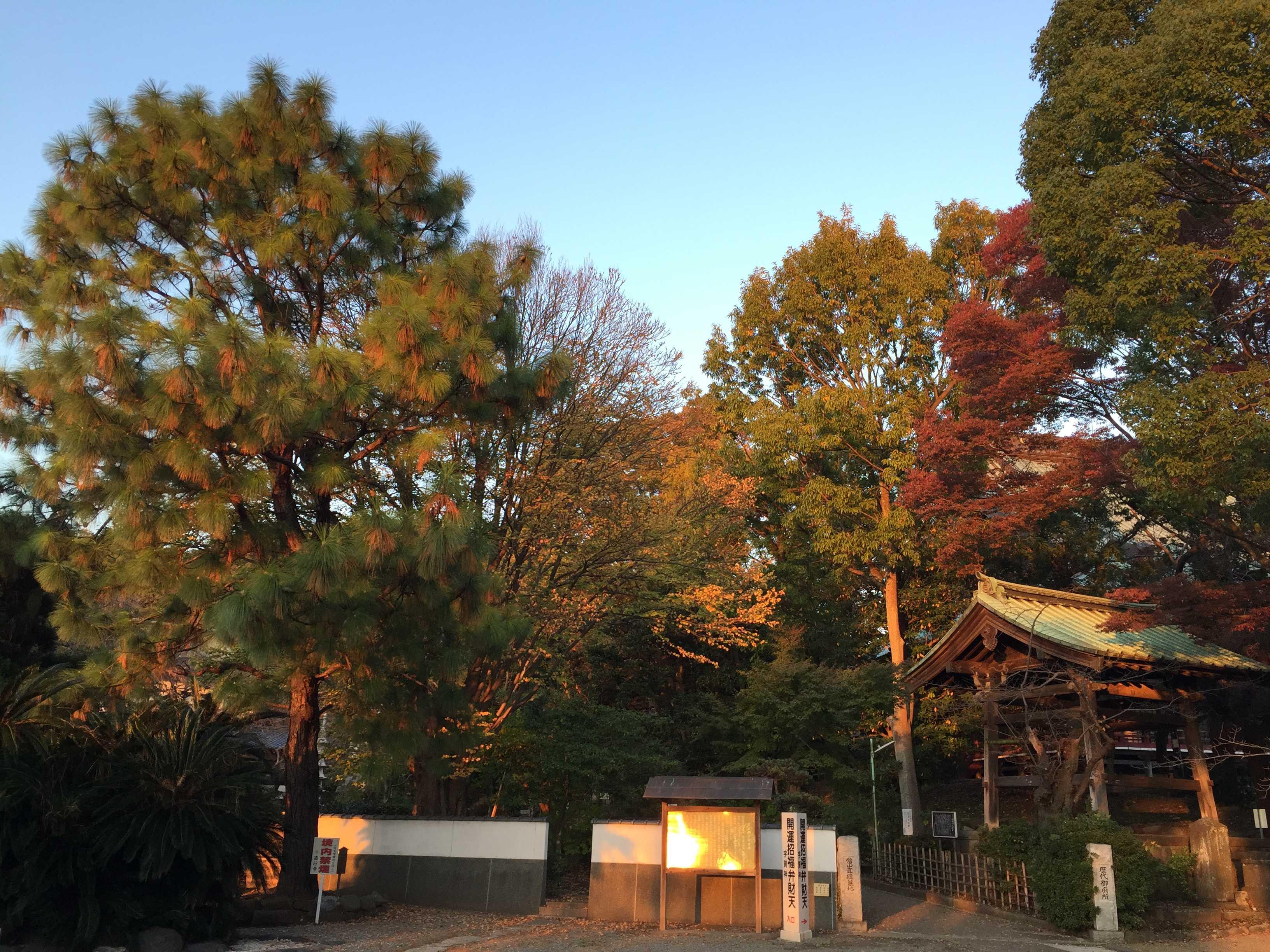 夕日に照らされる遊行寺境内